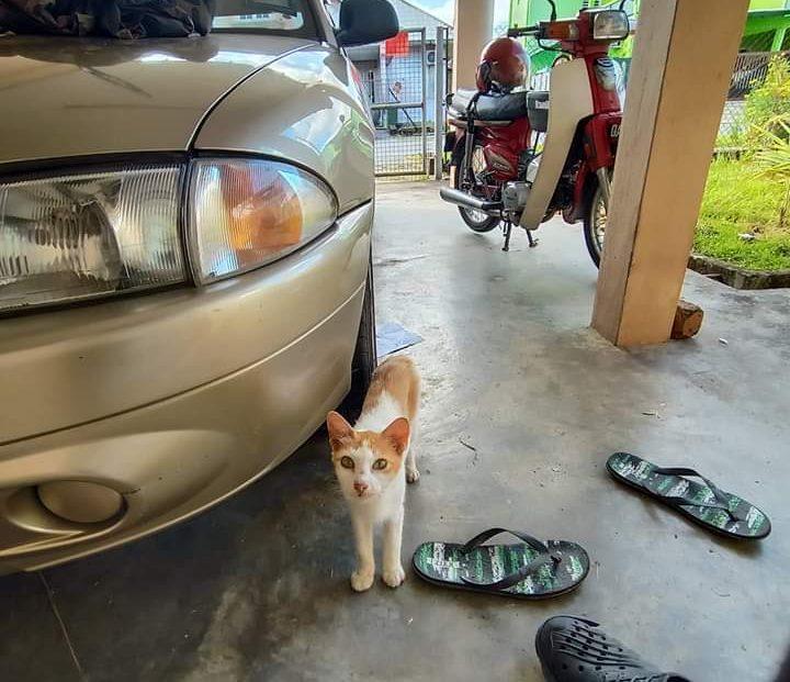 Rezeki Seekor Kucing